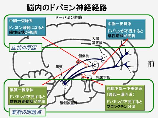 脳内のドパミン神経経路に関して、4つの経路と症状の関係をみてみました。