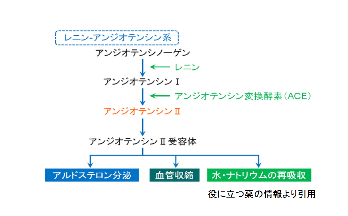 ACE阻害薬の作用機序についての図表です。役に立つ薬の情報HPのご厚意で引用させていただきます。