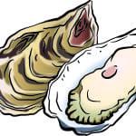 ノロウイルスの原因として有名な牡蠣について